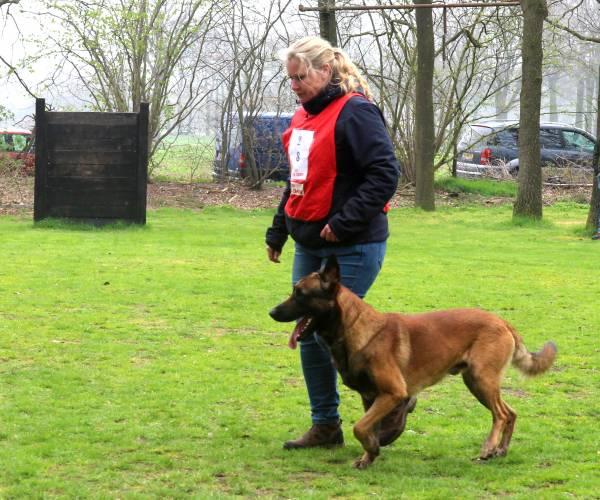 Jonge Honden Competitie leerzaam en spectaculair