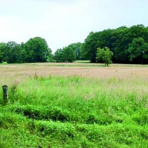 Walter Brunninkhuis krijgt eerste pluim als compliment voor duurzaam landschapsbeheer