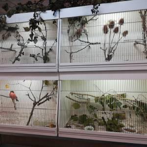 Vogels zingen het hoogste lied bij Vogelvereniging Tubbergen en omstreken