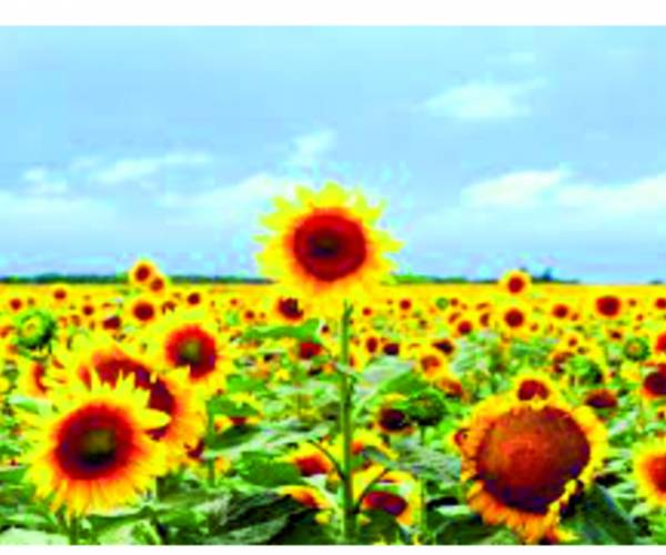 Geesteren bloeit als nooit tevoren en laat deze zomer zon in jullie harten schijnen