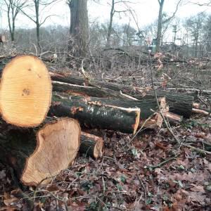 Boswachterswandelingen in Springendal en Dal van de Mosbeek